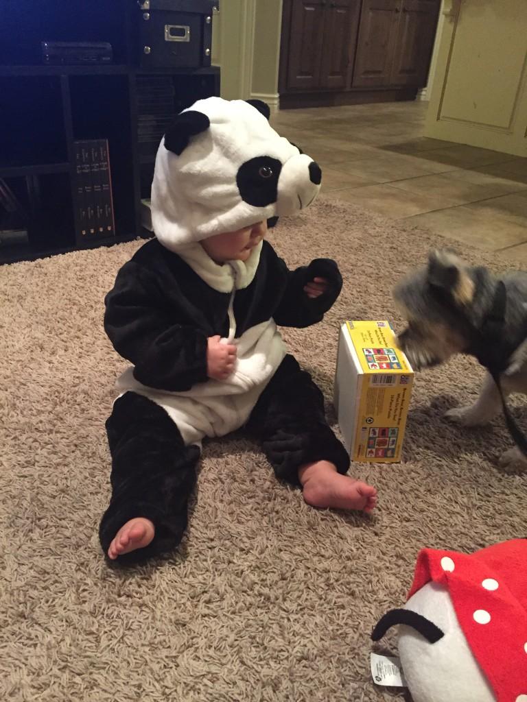 panda patronus
